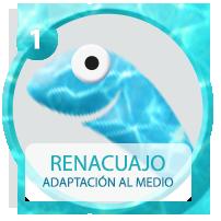 renacuajo_ON_OK